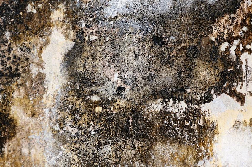 close up of black mold on brick wall